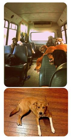 The doggie daycare bus. I kid you not. How can I get on this bus?