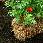 Grasping at Straw: Straw Bale Gardening article in the New York Times.