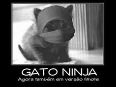 O ataque do Gato Ninja - YouTube