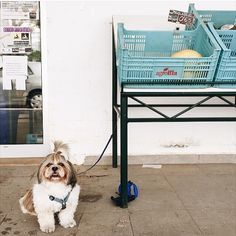 Pin for Later: 15 Instagram Accounts to Follow If You Are Utterly Obsessed With Animals Waiting Dogs Follow @waitingdogs.