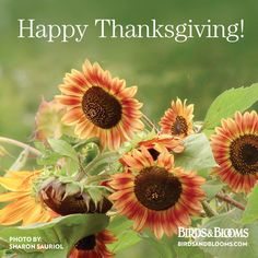 Happy Thanksgiving from birdsandblooms.com!