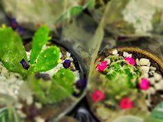 expo flores de holambra em salvador mini cactos