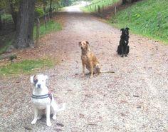 - Torino con Leo e Peja Leo, Dogs, Animals, Animales, Animaux, Pet Dogs, Doggies, Animal, Animais