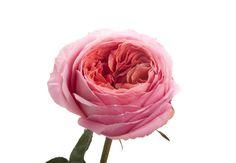 #Mancusos.com #Mancusosweddings.com #Detroit #MI #Florist #Flowers #Weddings #Roses