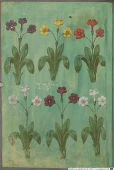 Greek Flowers, Love Flowers, Medieval Manuscript, Medieval Art, Flower Sketches, Indian Prints, Art File, Flower Fashion, Botanical Prints