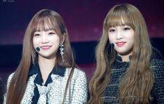 画像 Kpop Girl Groups, Kpop Girls, Wattpad, Baby Ducks, The Wiz, Jaehyun, Yuri, My Idol, Couples