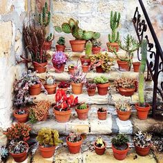 Cactus on stairs.  See more of our inspiration on www.escuyer.com