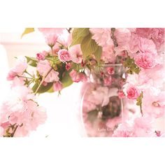 Pink Cherry Blossoms, Shabby Chic Decor, Pink Flower Blossoms Art,... (317.060 IDR) ❤ liked on Polyvore