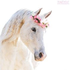 I love animals. Especially horses and puppies. So, except for 1 momentary lapse in judgement, animals are what you will see here. Most Beautiful Horses, All The Pretty Horses, Animals Beautiful, Cute Horses, Horse Love, Horse Photos, Horse Pictures, Cute Baby Animals, Animals And Pets