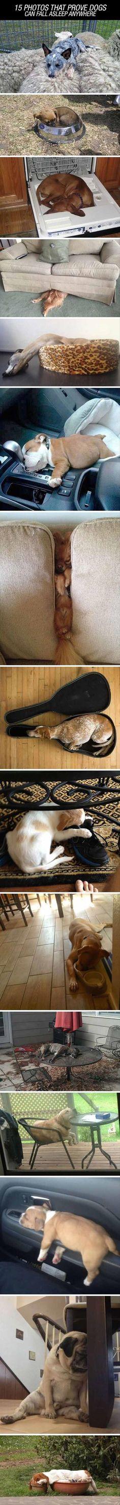 Dogs. Sleeping dogs.