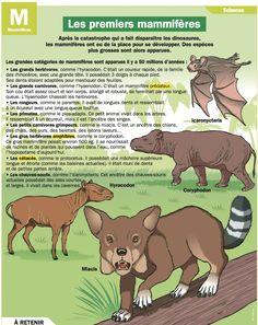 Fiche exposés : Les premiers mammifères