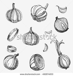 Hand drawn garlic and onions. Vegetables. Doodle set.
