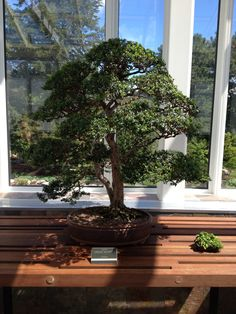 Bonsai from the Ordway Gardens