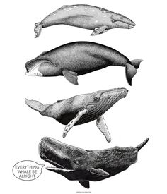 "Kohola Kai Creative 🌺 Tracie on Instagram: ""Keep calm and be kind 💙🐋 ・ ・ ・ ・ ・ #graywhale #bowheadwhale #humpbackwhale #kohola #spermwhale #クジラ #ザトウクジラ #くじら #ilovewhales…"" Gray Whale, Humpback Whale, Calm, Creative, Animals, Instagram, Animaux, Animal, Animales"