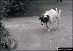 Google+ Dog decided to scare cat