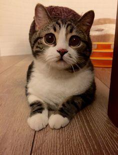 Meow~~meow~~