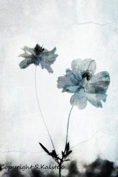 Ethereal Flower Photograph Pale Blue Gray by KalstekPhotography, $33.00