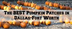 The BEST Pumpkin Patches in the Dallas - Fort Worth Metroplex. #dallas #halloween #pumpkin
