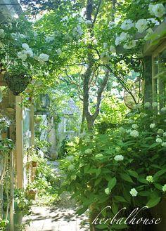 パティオ側からサマースノーのアーチを写してみました。 自然にまかせてできたアーチ...