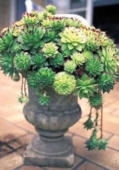 #garden #pottery #planters #pots