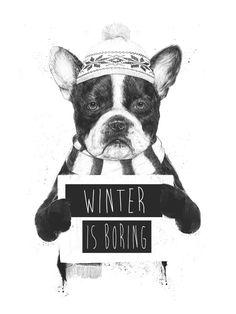 Bulldog winter is coming beanie dog pet hat scarf animal humor black and white art illustration print poster banner winter