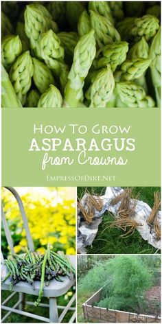 to Grow Asparagus from Crowns How to grow asparagus from crowns. This delicious spring vegetable also makes a gorgeous ornamental plant.How to grow asparagus from crowns. This delicious spring vegetable also makes a gorgeous ornamental plant. Growing Tomatoes In Containers, Growing Veggies, Growing Herbs, Growing Gardens, Grow Tomatoes, Home Vegetable Garden, Tomato Garden, Veggie Gardens, Tomato Plants