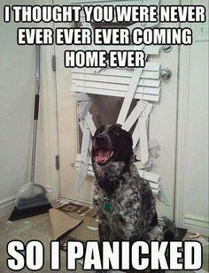 funny #Dog #Humor