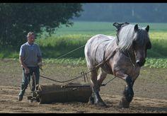 Witloofboer met Brabander... hoe Vlaams-Brabants kan je zijn?