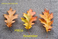 Foglie di Novembre ...