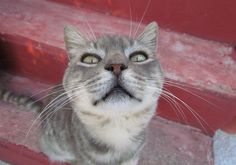 #Cat #Appetites Change Through The #Seasons