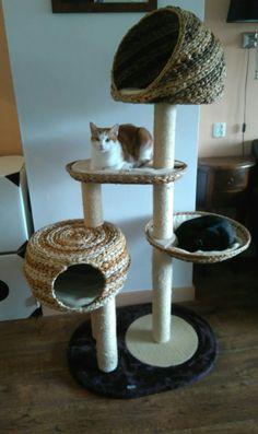 Twee blije katjes zo met hun nieuwe krabpaal