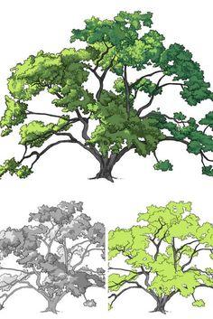 Coloration d'un chêne (arbre). Dessin étape par étape.