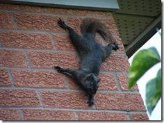 Spiderman squirrel :)