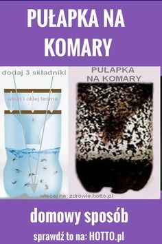 HOTTO.PL-PULAPKA-NA-KOMARY Home Hacks, Diy And Crafts, Good Things, Aga, Health, Projects