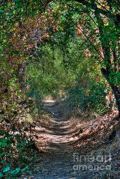Trail in Folsom, CA.
