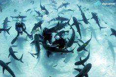 Mergulhar com os tubarões: se você sobreviver a essa, você pode fazer todas as outras mil coisas! Então, para os corajosos um mergulho com tubarão não pode faltar. As águas cristalinas do Caribe são perfeitas para a atividade.