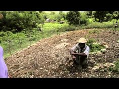 "another video by Bob Cirino, also known as Biochar Bob. on a visit to Haiti where there's been time for the soil improved with biochar to show its productivity. ""be cool to the planet!"" Carbon Roots International"