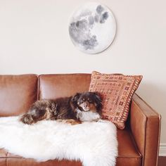 """Stella Maria Baer on Instagram: """"@foxthesheepdog tells us who this couch really belongs to in a tour of our apartment and my studio, up on the @westelm blog today"""""""