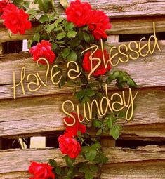 Happy Sunday Images Quotes and Greetings Happy Sunday Hd Images, Good Morning Greetings Images, Good Morning Sunday Images, Sunday Greetings, Good Morning Happy Sunday, Good Morning Flowers, Good Morning Wishes, Sunday Gif, Sunday Pictures