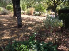 De tuin in de zomerhitte.