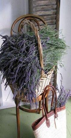 lavendel voor Baukje