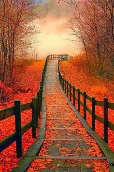 Autumn Path.