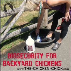 Biosecurity refers to an overall system for protecting backyard chickens from infectious diseases. Each backyard chicken keeper will approach biosecurity differently based on personal risk tolerances, but even implementing the most basic biosecurity measures significantly limits potential health threats to a flock.