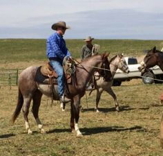Gorgeous Red Roan Ranch Gelding for Sale - For more information click on the image or see ad # 33682 on www.RanchWorldAds.com