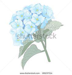 hydrangea illustration free - Google Search