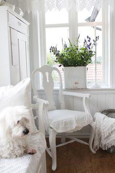 Shabby white with shaggy dog lovely