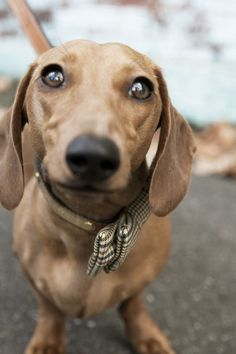 17 Most Difficult Emotions Dachshunds Go Through That Their Owners Must Never Forget