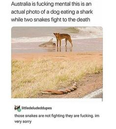 Laughing So Hard My belly Is thriving Lol. This lol laughing so hard pictures make you happy for whole day.Read This 22 lol laughing so hard Crazy Funny Memes, Really Funny Memes, Stupid Memes, Funny Relatable Memes, Haha Funny, Funny Posts, Funny Cute, Funny Stuff, Hilarious Jokes