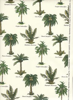Palm Tree Varieties for an inside garden! Illustration Botanique, Cactus Y Suculentas, Tropical Plants, Tropical Gardens, Botanical Prints, Textures Patterns, Landscape Design, Drawings, Flowers