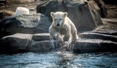 Polar Bear Cubs, Circus Elephants, and More at the Columbus Zoo and Aquarium
